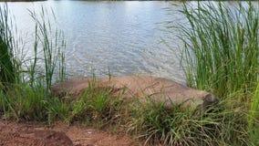 Λίθος στην άκρη νερών Στοκ εικόνες με δικαίωμα ελεύθερης χρήσης