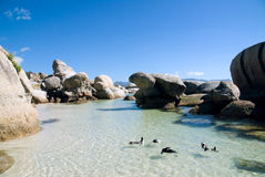 λίθος pinguins s παραλιών Στοκ Εικόνα