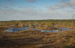 Λίμνες ελών στην ανατολή Στοκ εικόνες με δικαίωμα ελεύθερης χρήσης