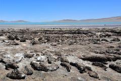 Λίμνες του Θιβέτ Το κατάστημα της λίμνης του κοβαλτίου του Sam το καλοκαίρι στο σαφή καιρό στοκ φωτογραφία με δικαίωμα ελεύθερης χρήσης
