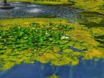 Λίμνες του ουρανού στοκ φωτογραφία με δικαίωμα ελεύθερης χρήσης