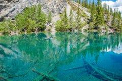Λίμνες Grassi, Canmore, Αλμπέρτα στοκ φωτογραφίες με δικαίωμα ελεύθερης χρήσης