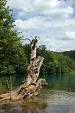 Λίμνες Plitvice, εθνικό πάρκο στην Κροατία Στοκ Φωτογραφία