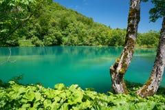 Λίμνες Plitvice της Κροατίας - εθνικό πάρκο το καλοκαίρι Στοκ εικόνα με δικαίωμα ελεύθερης χρήσης