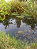 Λίμνη άγριας φύσης κήπων Στοκ Φωτογραφίες