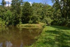 Λίμνη αγριοτήτων στοκ εικόνα με δικαίωμα ελεύθερης χρήσης