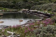 Λίμνη ακτών με τις βόρεια χλόες και τα λουλούδια στοκ εικόνα με δικαίωμα ελεύθερης χρήσης
