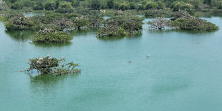 Λίμνη αδύτων πουλιών Στοκ Εικόνες