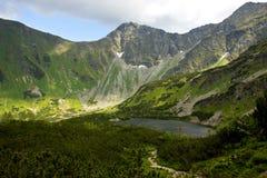 Λίμνη βουνών και νάνο πεύκο Στοκ εικόνες με δικαίωμα ελεύθερης χρήσης