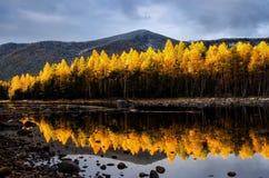 Λίμνη βουνών με το κίτρινο δάσος, Ρωσία, Σιβηρία, Froliha κοντά στη λίμνη Baikal στοκ εικόνα με δικαίωμα ελεύθερης χρήσης