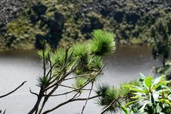 Λίμνη βουνών στην είσοδο στην οικολογική επιφύλαξη Antisana Στοκ φωτογραφία με δικαίωμα ελεύθερης χρήσης
