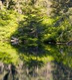 Λίμνη βουνών στο άγριο taiga Στοκ Εικόνες