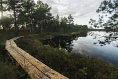 Λίμνη γεφυρών για πεζούς και ελών στοκ φωτογραφία με δικαίωμα ελεύθερης χρήσης
