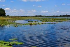 Λίμνη γλυκού νερού στη Φλώριδα με την αντανάκλαση σύννεφων Στοκ Εικόνα