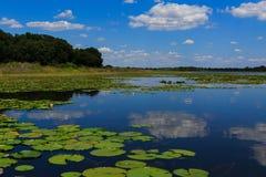 Λίμνη γλυκού νερού στη Φλώριδα με την αντανάκλαση σύννεφων Στοκ Φωτογραφίες