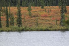 Λίμνη-δέντρο-και λιβάδι Στοκ εικόνες με δικαίωμα ελεύθερης χρήσης