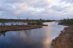 Λίμνη ελών στην ανατολή Στοκ φωτογραφία με δικαίωμα ελεύθερης χρήσης