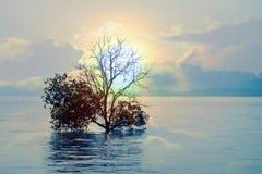 Λίμνη ηρεμίας με το δέντρο στη μέση Στοκ Εικόνα