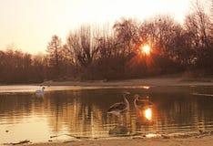 Λίμνη ηλιοβασιλέματος στο πάρκο Στοκ Φωτογραφίες