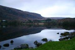 λίμνη ιρλανδικών αγελάδων Στοκ Εικόνες