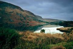 λίμνη ιρλανδικών αγελάδων Στοκ εικόνες με δικαίωμα ελεύθερης χρήσης