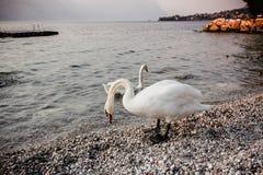 Λίμνη Ιταλία Ευρώπη Garda στοκ φωτογραφία με δικαίωμα ελεύθερης χρήσης