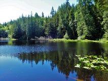 Λίμνη κέδρων στις αρχές του καλοκαιριού στο βουνό Chuckanut Στοκ εικόνα με δικαίωμα ελεύθερης χρήσης