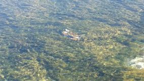 Λίμνη καβουριών στοκ φωτογραφία με δικαίωμα ελεύθερης χρήσης