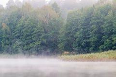 Λίμνη και δάσος της Misty στοκ εικόνες