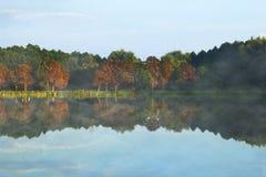 Λίμνη και δέντρα πυροβολισμός ξημερωμάτων φύσης στοκ εικόνα