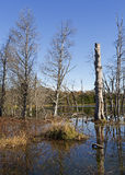 Λίμνη και δέντρα Στοκ φωτογραφίες με δικαίωμα ελεύθερης χρήσης