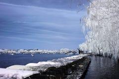 Λίμνη και ιτιά Στοκ Φωτογραφίες