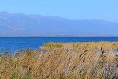 Λίμνη και κάλαμος Στοκ Εικόνα