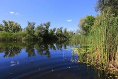 Λίμνη και κάλαμος Στοκ φωτογραφίες με δικαίωμα ελεύθερης χρήσης