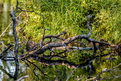 Λίμνη και κλάδος Στοκ φωτογραφία με δικαίωμα ελεύθερης χρήσης