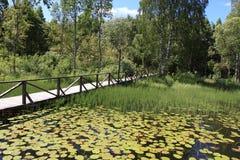 Λίμνη και τοπίο σπουδαίου Ρώσου Στοκ Εικόνα