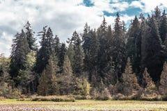 Λίμνη καστόρων στο πάρκο του Stanley, Βανκούβερ, Π.Χ., Καναδάς Στοκ Εικόνες