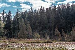 Λίμνη καστόρων στο πάρκο του Stanley, Βανκούβερ, Π.Χ., Καναδάς Στοκ φωτογραφία με δικαίωμα ελεύθερης χρήσης