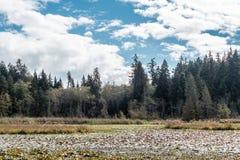Λίμνη καστόρων στο πάρκο του Stanley, Βανκούβερ, Π.Χ., Καναδάς Στοκ εικόνα με δικαίωμα ελεύθερης χρήσης