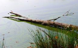 λίμνη κλάδων Στοκ φωτογραφίες με δικαίωμα ελεύθερης χρήσης