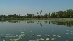 Λίμνη κρίνων νερού με το τροπικό υπόβαθρο δέντρων απόθεμα βίντεο