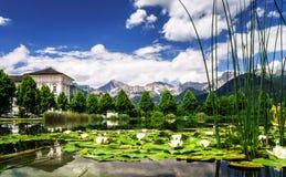 Λίμνη κρίνων νερού στην Αυστρία Στοκ Φωτογραφίες