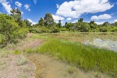 Λίμνη κρίνων στο δάσος Karura, Ναϊρόμπι, Κένυα Στοκ φωτογραφία με δικαίωμα ελεύθερης χρήσης