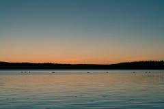 Λίμνη κύκνων Στοκ Φωτογραφίες