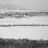 Λίμνη κύκνων Rongcheng Στοκ εικόνα με δικαίωμα ελεύθερης χρήσης