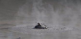 Λίμνη λάσπης - θερμική χώρα των θαυμάτων wai-ο-Tapu στοκ φωτογραφίες