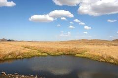 λίμνη λιβαδιών Στοκ Εικόνα