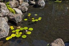 λίμνη λωτού κήπων Στοκ Εικόνα