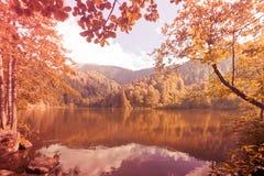 Λίμνη μεταξύ του δέντρου και των φύλλων Στοκ Εικόνα