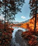 λίμνη μεταξύ των δέντρων και των φύλλων Στοκ Φωτογραφίες